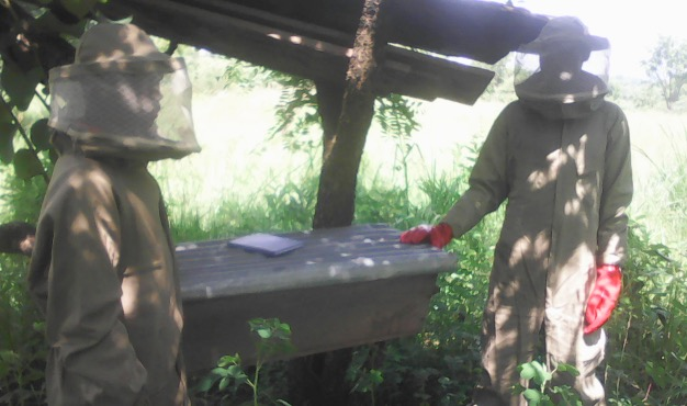 Members using bee suit produced by HIVE Uganda in their hives.
